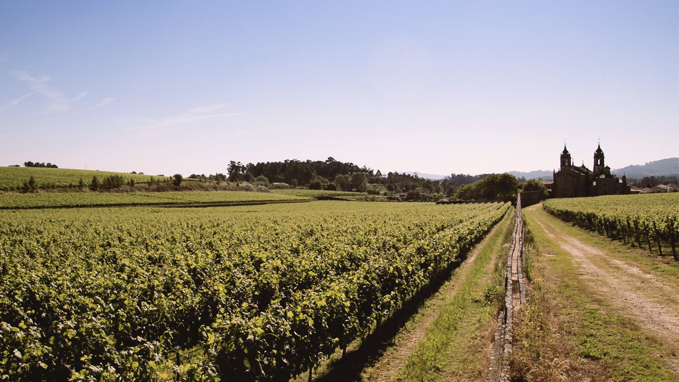 Quinta D'Amares wine production